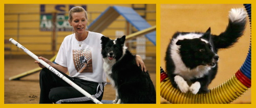 obedience classes animal barn pet paradise mobile al